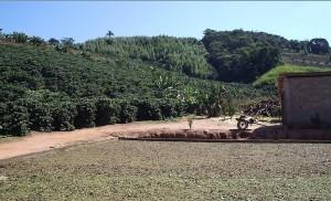 A plantação de café existente na propriedade localizada no interior de Minas Gerais